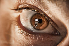 Brown eye Stock Photos