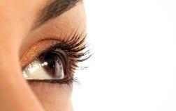 Brown eye Stock Photography