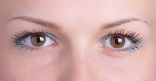Brown eye Stock Image