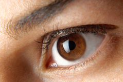 Brown eye. A closeup female eye royalty free stock image