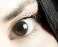 Brown Eye. Woman brown eye close up Stock Image