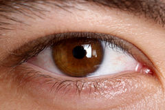 Brown eye. The beautiful brown eye macro Royalty Free Stock Image