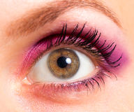 Brown eye with bright pink and violet makeup Stock Images