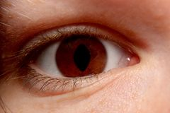 Brown Eye Close-Up Stock Photography