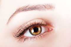 Brown eye. Close up of womans brown eye with false eye lashes Stock Photo