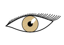 Brown eye. Illustration of a Brown eye stock illustration