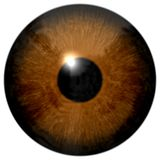 Brown eye illustration isolated on white. Brown eye (eyeball, retina, pupil, iris) illustration isolated on white background stock photo