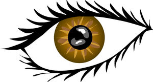 Brown Eye with lashes. A illustration of a Brown Eye with lashes Stock Image