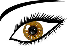 Brown Eye with lashes. Illustration of a Brown Eye with lashes Stock Photography