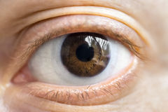 Brown eye with lens. Brown eye macro with lens Stock Images