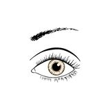 Brown eye line art Royalty Free Stock Photo
