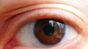 Brown eye macro with lens stock video footage
