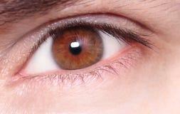 Brown Eye with macro shot, Royalty Free Stock Image