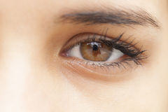 Brown Eye Royalty Free Stock Photos