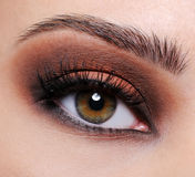 Brown eye make-up. Front view of a close-up female eye with brown eyeshadow make-up royalty free stock image