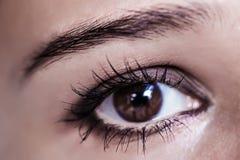 Brown Eye Makeup. Beautiful Eyes Make-up. Macro Royalty Free Stock Photography