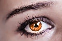 Brown Eye Makeup. Beautiful Eyes Make-up. Macro Stock Photography