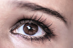Brown Eye Makeup. Beautiful Eyes Make-up. Macro Royalty Free Stock Photo