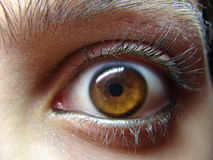 Brown eye staring. Brown eye wide open lookig front royalty free stock images