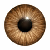 Brown eye texture Royalty Free Stock Images