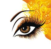 Brown eye. Vector illustration  Royalty Free Stock Photo