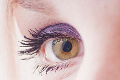 Brown eye of woman Royalty Free Stock Photo