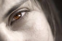 Brown eye woman closeup shot Royalty Free Stock Photo
