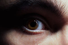 Brown eye Royalty Free Stock Images