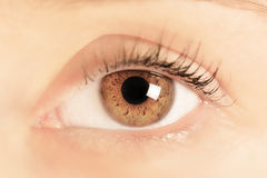 Brown eye of a young woman. Close-up. Focus on iris royalty free stock image