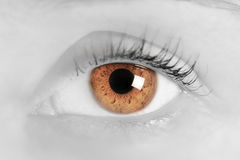 Brown eye of a young woman. Close-up. Focus on iris Stock Photos