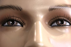 Brown Eyed Gaze. A close shot of a woman mannequin's face with glossy brown eyes Royalty Free Stock Image