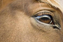 Brown eyed horse Stock Photos