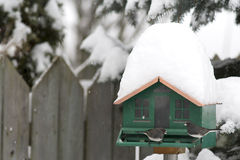 Dark-Eyed Juncos at Feeder in Winter Stock Image