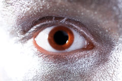 Brown eyes. Brown male eyes with dilated pupil closeup royalty free stock photos