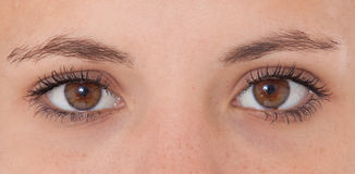 Brown eyes. Of an attractive girl stock photos