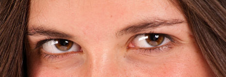 Brown eyes Royalty Free Stock Photo