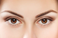 Brown eyes. Close up image of female brown eyes Stock Image