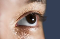 Brown eyes and lashes stock images