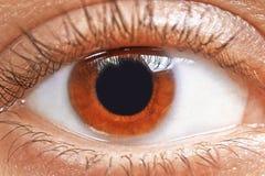 Brown eyes a menina Fotografia de Stock