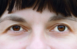 Brown eyes Royalty Free Stock Images