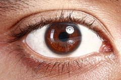 Brown eyes from a young man Royalty Free Stock Photo