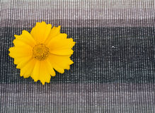 Brown fabric and yellow flower Royalty Free Stock Photography