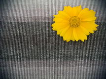 Brown fabric and yellow flower Royalty Free Stock Photo