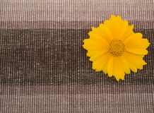 Brown fabric and yellow flower Stock Photos
