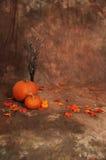 Brown fall backdrop scene Stock Photos