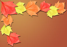 Brown Fall Background Border with Copyspace Stock Photo