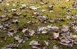 Brown fallen leaves on the ground Stock Photo