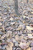 Brown fallen leaves Stock Photo