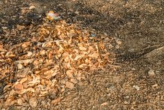 Brown fallen leaves laying on the ground. Stock Images