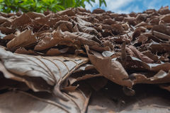 Brown fallen leaves. In soft focus stock photos